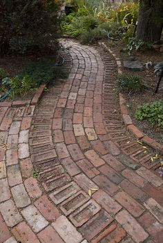 Canberra red recycled brick path leading to the house Brick Pathway, Brick Paving, Front Walkway, Garden Paving, Garden Landscaping, Garden Path, Shade Landscaping, Landscaping Ideas, Back Gardens