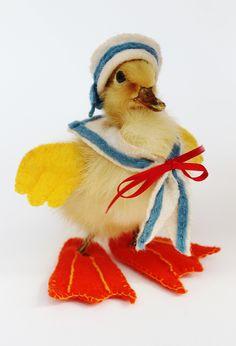 Taxidermy Sailor Duckling