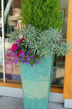 aqua pot with purple-pink