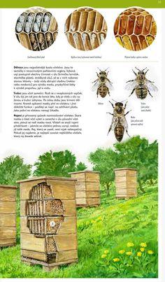 Kindergarten, Elementary Schools, Inspiration, Crafts, Animals, Image, Biblical Inspiration, Manualidades, Animales