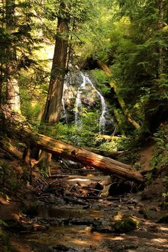Forest Waterfall, The Redwoods, California. I REALLY want to visit a Redwood forest. Oh The Places You'll Go, Places To Visit, Forest Waterfall, Les Cascades, Rando, Destination Voyage, Walk In The Woods, Le Far West, Beautiful Landscapes