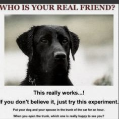 Who is your real friend? If you don't believe it, just try this experiment..... Put your dog and your husband in the trunk of the car for an hour. When you open the trunk, which one is really happy to see you?  LOL!!