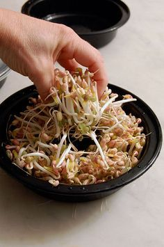 Grow mung bean sprouts at home in 3 days using takeout food containers. Plus my 2 tips for getting longer thicker sprouts like storebought. Bean Sprout Recipes, Raw Food Recipes, Healthy Recipes, Growing Sprouts, Clean Eating, Healthy Eating, Sprouting Seeds, Mung Bean, Asian