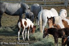 Same mustang mare and foal