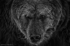 """German photographer Wolf Ademeit makes """"animal portraits"""" that show exotic animals displaying an incredible range of emotions."""