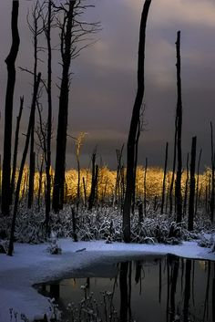 stark   Just awful to see a burnt forest, just hurts down deep in my soul! But I realize it help nature renew and replenish :-)
