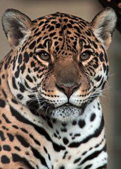 ~~jaguar antwerpen by j.a. kok~~