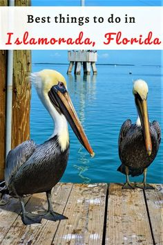Are you planning to visit Florida Keys? Make sure to include Islamorada in your Florida Keys itinerary. It's known for fishing, but there are many other things to do in Islamorada to keep you busy. Use this Islamorada travel guide to find out all the attractions, where to eat and stay in Islamorada. #Floridakeys #Florida #USA #Visitflorida #travel