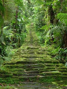 Santa Marta, Colombia -- La Ciudad Perdida (The Lost City). Hidden (literally) in the crevices of northern Colombia's Santa Marta Sierra Nevada mountain range, La Ciudad Perdida was built by the Tayrona people around 800 AD. Ecuador, Oh The Places You'll Go, Places To Travel, Places To Visit, Sierra Nevada, Machu Picchu, Colombia Travel, Lost City, South America Travel