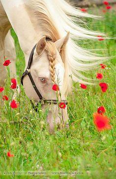 scarlettjane22: PoppiesPictures Elsa Meier
