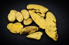 Alluvial gold from the Corinna area, NW Tasmania.