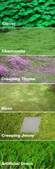 types of groundcover