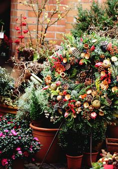 Christmas time in the garden..