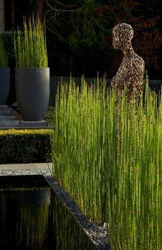 planter des bambous, bambous verts, parterre prè d'une piscine moderne