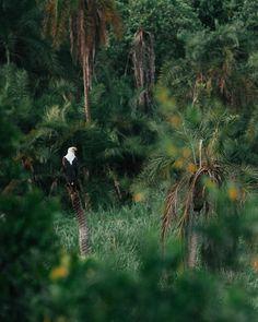 Boat safari on the Kazinga Channel is a must-do in Uganda's Queen Elizabeth National Park. #safari #africa #uganda Gorilla Trekking, Uganda Travel, Mountain Gorilla, List Of Activities, Paradise Found, Baboon, Photo Location, Queen Elizabeth, Travel Guides