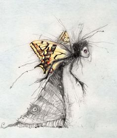 zdenko_basic Butterfly