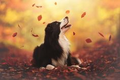 This Photographer Takes The Most Amazing Photos Of Dogs Enjoying Autumn