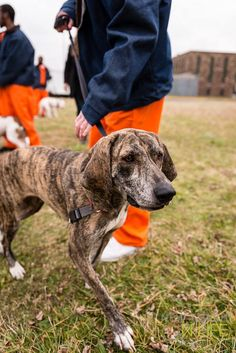 Going To Prison Was The Best Thing That Ever Happened To These Dogs. Here's Why.