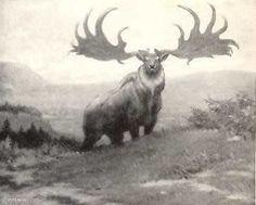 Irish Deer