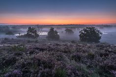 'before sunrise Maasduinen' by Chris Hornung - Photo 124199577 - 500px