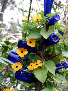bottle tree with climbing vine - love! I grow black-eyed susan vines each year and this is a great new idea for them! I love bottle trees too! Blue Bottle, Bottle Art, Bottle Painting, Garden Crafts, Garden Projects, Black Eyed Susan Vine, Easy Garden, Upcycled Garden, Garden Art
