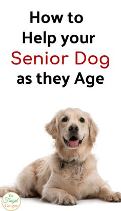 How to Help your Dog as they Age: Caring for Senior Dogs - Help your dog as they age with these senior dog care tips. Make your older dog as happy, healthy, a - Cat Care Tips, Dog Care, Pet Tips, Dog Varieties, Best Dog Food, Baby Dogs, Doggies, Old Dogs, Happy Healthy