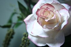 coffee filter rose tutorial (similar to the martha stewart one!) i can't believe how real these turn out.