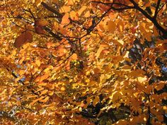 Five of the Best Trees for Autumn Colour