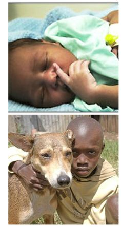 "Here are real pictures of this amazing story .""A newborn baby abandoned in a Kenyan forest was saved by a stray dog who apparently carried her across a busy road and through a barbed wire fence to a shed where the infant was discovered nestled with her litter of puppies.""  from news.bbc.co.uk"