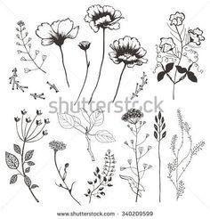 wildflowers illustrations的圖片搜尋結果