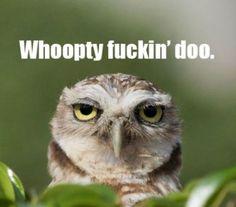 Owl humor