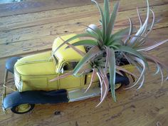 Air Plant / Yellow Vintage Truck with Eric by Airplantsforyou