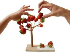 Among other things, I am obsessed with cute little presentations for the hors d'oeuvres I never make (to feed the guests I never invite over). This ridiculous Arbre à manger € via Made In Design). Modern Fruit Bowl, Fruit Holder, Fruit Creations, Diy Adult, Branch Decor, Tree Crafts, Food Design, Design Design, Interior Design