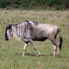 Nairobi, Horses, Animals, Animales, Animaux, Animal, Animais, Horse