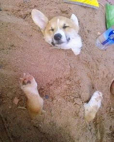 Cute Dog in the Sand puppy-love