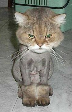 hahahaha...this is one unhappy cat!  at least this winter he will have uggs to keep him warm