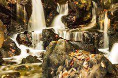 じょぼぼ  #川#river#水#water #落ち葉#葉っぱ#紅葉#reeves #秋#autumn #公園#park #風景#自然#景色#picture#landscape#nature #東京#日本#tokyo#japan#love #写真好きな人と繋がりたい