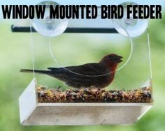 1000+ images about Window Bird Feeders with Suction Cups