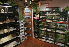 Really cool looking herp/reptile room. I like how they tried to tie everything together.