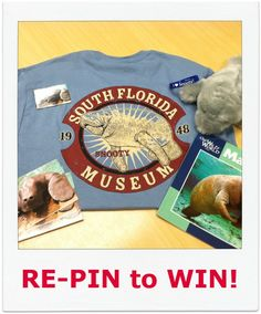 """Baby Snoots is all grown up...  In honor of gaining 1000 followers on Pinterest, the South Florida Museum will be giving away this special Snooty package to one Pinterest fan. This includes a t-shirt, Snooty postcards, Manatee book, stuffed Snooty toy, and one """"I love Snooty"""" bracelet. Re-Pin this image and check back on June 5th for the announcement of the winner!"""
