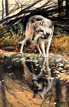 WOLF REFLECTION Watercolor Painting Art Print by k9artgallery   WATERCOLOR