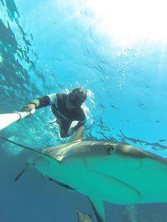 # Im Interview: Christian Redl und sein Einsatz zum Schutz der Haie