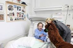 Alpacas as therapy pets.oh let me just bring my lama looking animal to the hospital, nbd Alpacas, Alpaca Facts, Pediatric Ot, Llama Alpaca, The Ranch, Beautiful Creatures, Make Me Smile, Cuddling, Pitbulls