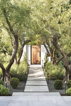 limestone pavers with lavender and old-growth manzanilla olive trees