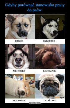 Gdyby porównać stanowiska pracy do psów: