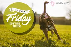 #HappyFriday Enjoy the #Weekend! #Dogs #DogsOfTwitter #DogLovers #DogBoarding