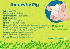 http://vegan-friends.com/pigs-interesting-facts/2016/06/13/