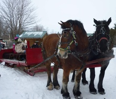 Horse-drawn sleigh ride at the sugar house :)