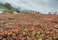 Nový materiál pro zelené střechy | Knauf Insulation