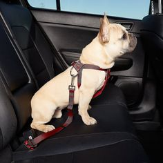 Get all the dog travel carriers & crates to dog travel accessories and out door dog gear. When you need to travel with your dog safely and comfortably, including car seat covers, dog car seats, crash tested harnesses. At Dogs Travel Safe! Dog Seat Belt, Seat Belts, Dog Body Language, National Animal, Sleeping Puppies, Dog Safety, Dog Diapers, Dog Activities, Dog Travel
